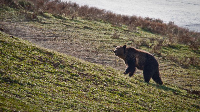 ALASKA CALLS FOR BOARD MEETING REGARDING 2020 SPRING BEAR PERMITS