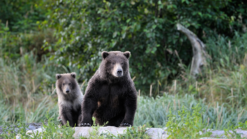 Wyoming shed hunter attacked by grizzly bear