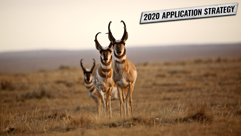 Montana speedgoat application strategy 2020