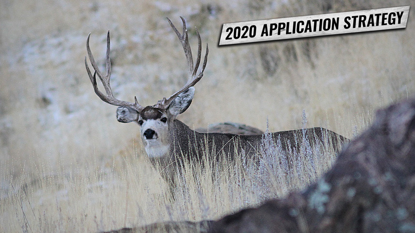 2020 Application Strategy: Arizona deer, bighorn sheep, and bison