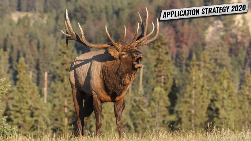 Application Strategy 2020: New Mexico elk and deer