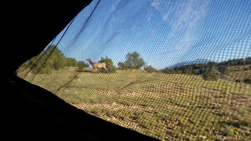 View inside blind as a cow elk walks by