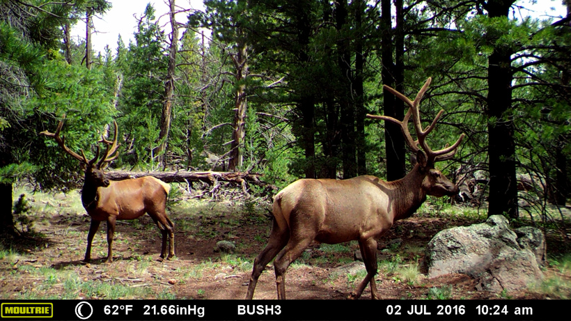 Three of a kind - An Arizona elk hunt | goHUNT