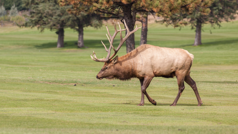 23 hunters get a chance to hunt Arkansas elk this fall