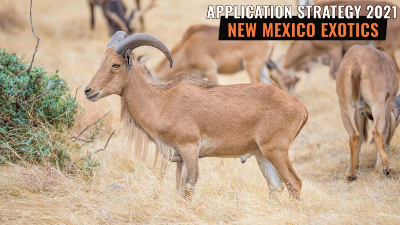 2021 NEW MEXICO ORYX, IBEX, & BARBARY SHEEP/AOUDAD APPLICATION STRATEGY