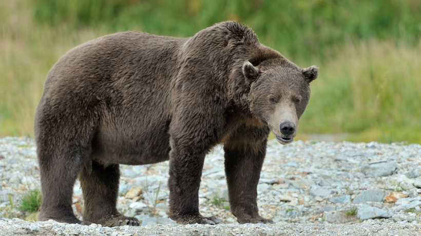 Montana closes Muddy Creek Falls Trail due to grizzly bears