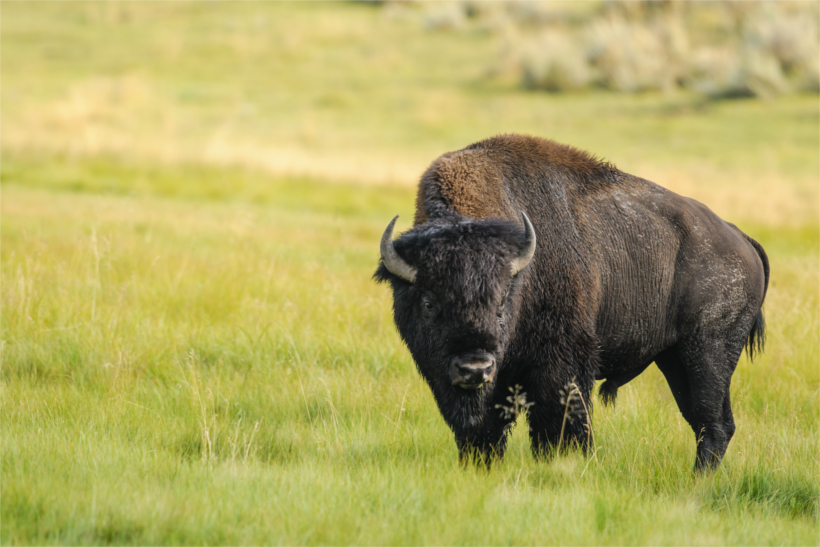 Arizona establishes bison preserve gohunt for Az game and fish draw results 2017