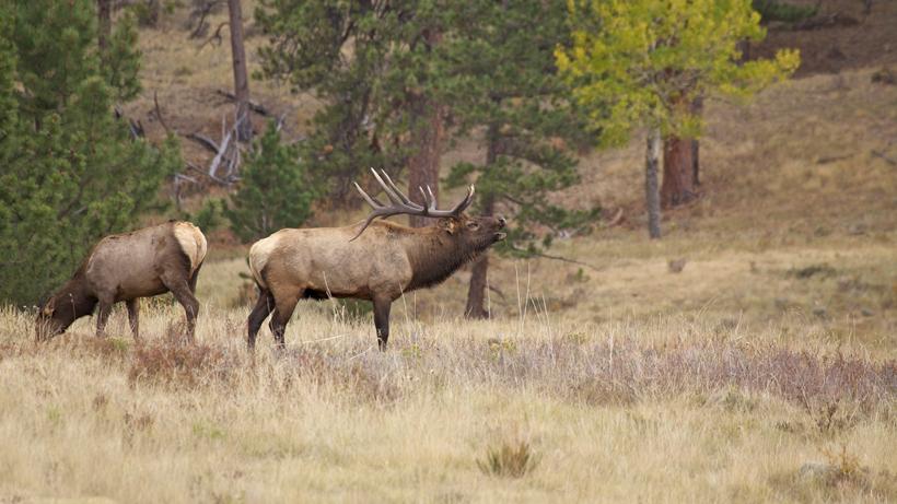 South Dakota elk hunting