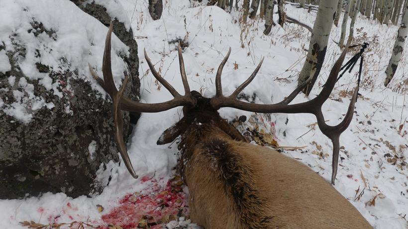 Colorado OTC bull elk hunt