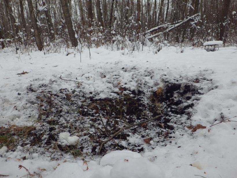 Deer scrape in the snow