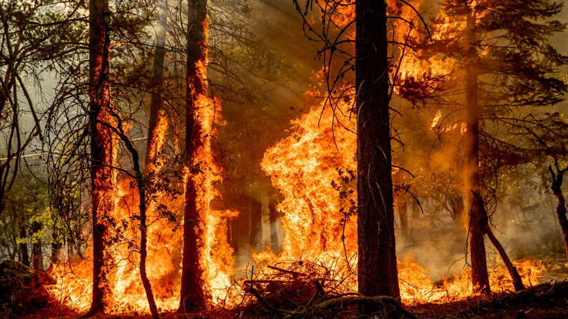 Pacific Southwest California National Forests are closed due to wildfires