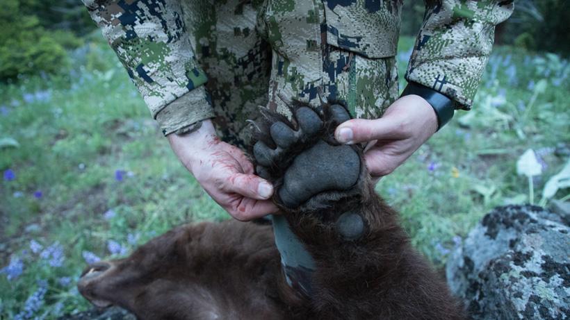 OTC Spring bear hunting opportunities