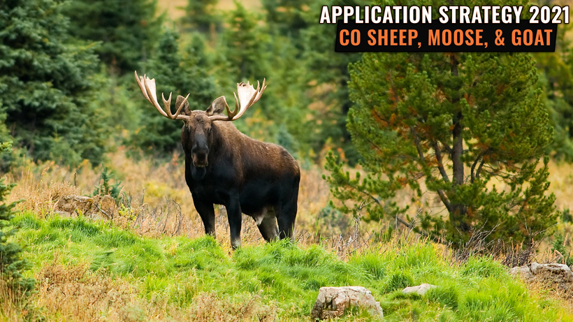 Application Strategy 2021: Colorado Sheep, Moose, and Mountain Goat