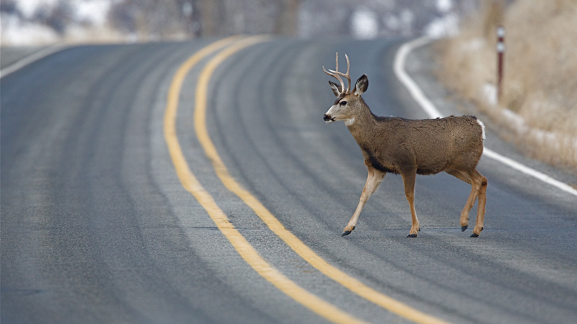 Wyoming to hold meeting to discuss wildlife-vehicle collisions
