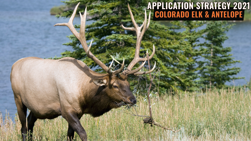 Application Strategy 2021: Colorado Elk and Antelope