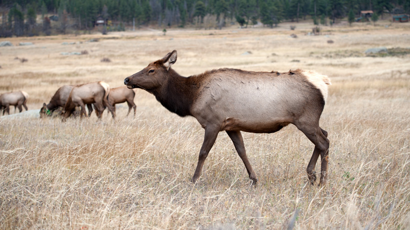 Wyoming to collect CWD samples from mule deer and elk