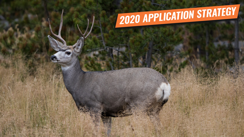 Application strategy 2020: California deer and antelope