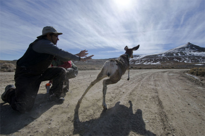 Researchers discover new disease among wyoming mule deer for Wyoming game and fish regulations