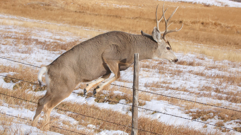 New group works to fix fencing for wildlife