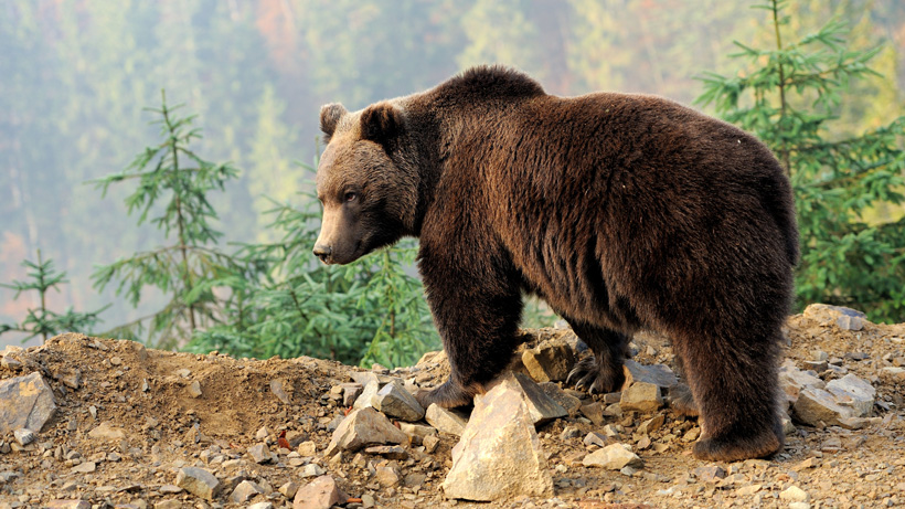 Biologist attacked by grizzly bear says he was at fault