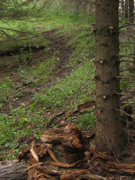 Heavily used deer trail