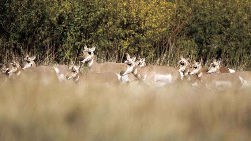 Habitat regeneration in Wyoming burn area starts to benefit big game