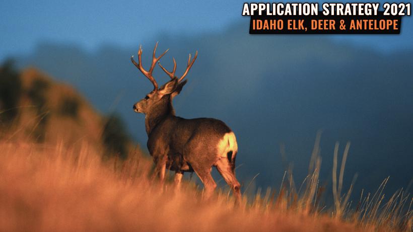 Application Strategy 2021: Idaho Elk, Deer, and Antelope