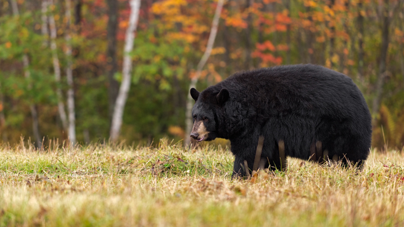 "Idaho experiences surge in ""blatant poaching"""