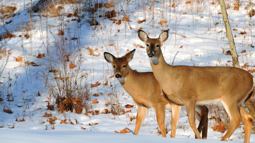 Kansas man convicted of poaching 60 deer