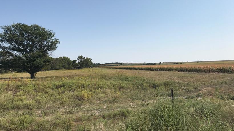 Kansas whitetail hunt