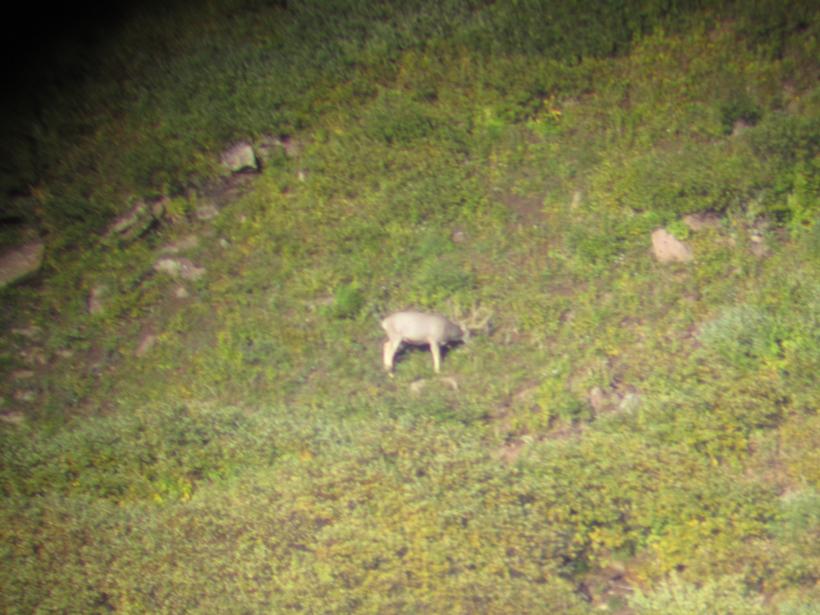 Bucks through the spotting scope