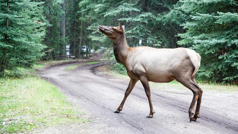 Four men injured on way to Idaho hunting trip