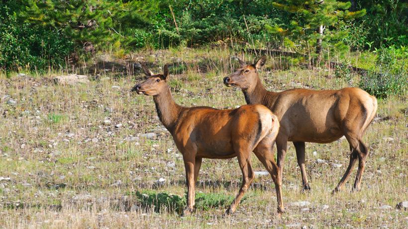 First Michigan elk season a success