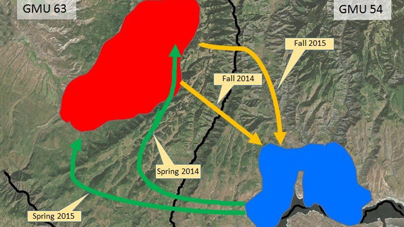 Migration path of a single elk