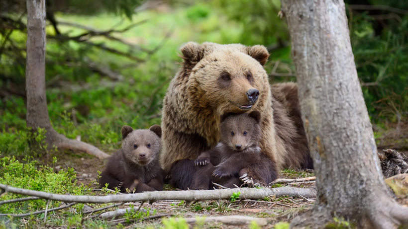 Montana hunter attacked by grizzly bear