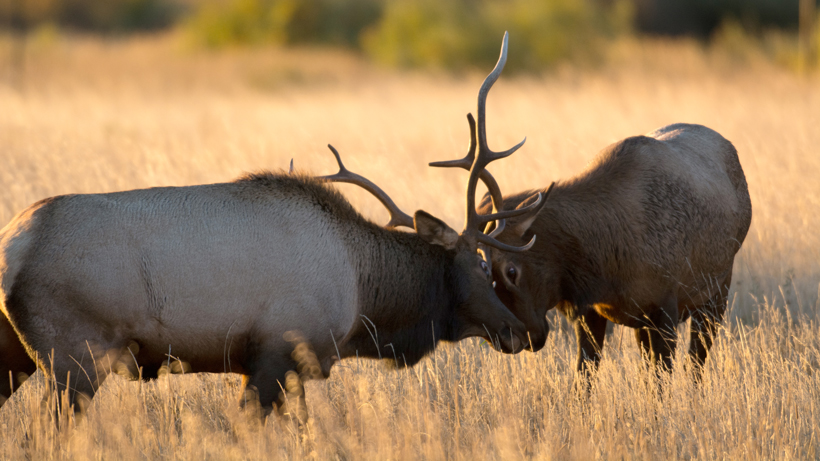 Montana changes outfitter hunting license allocation and preference point system