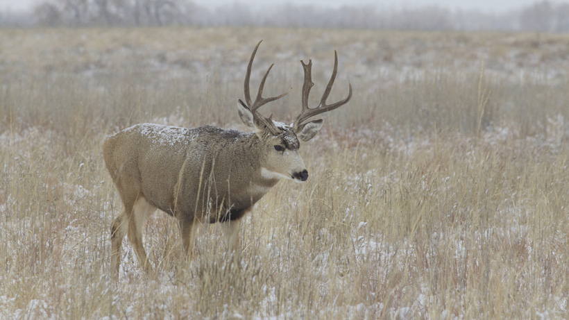 Cwd hits montana gohunt for Montana fish wildlife and parks drawing results