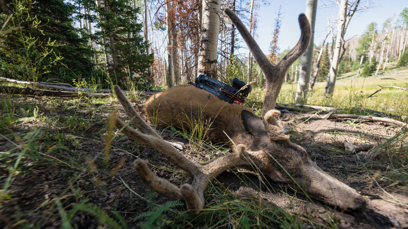 Chris Neville's 2019 archery mule deer buck