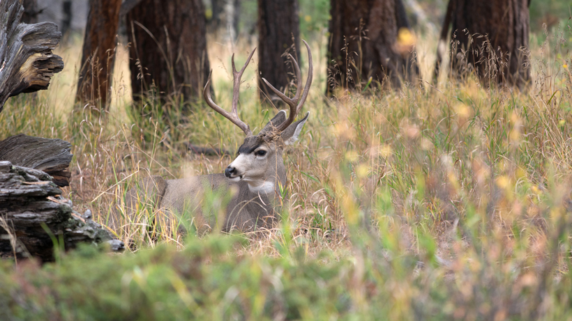 $1.06 million to go towards mule deer conservation projects in Utah