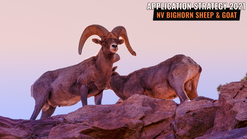 Application strategy 2021: Nevada bighorn sheep and mountain goat