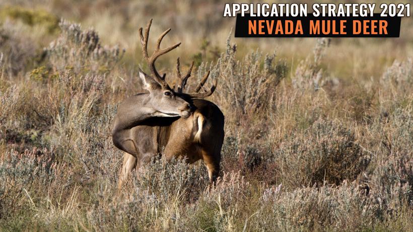 Application Strategy 2021: Nevada Mule Deer