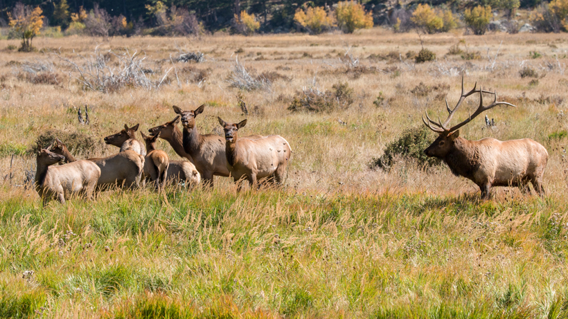 Lawsuit filed over New Mexico elk
