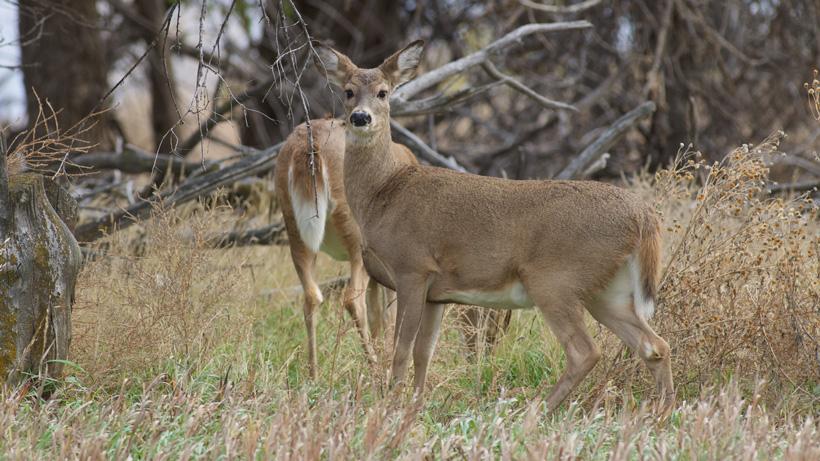 License sales surge in New York for regular deer season