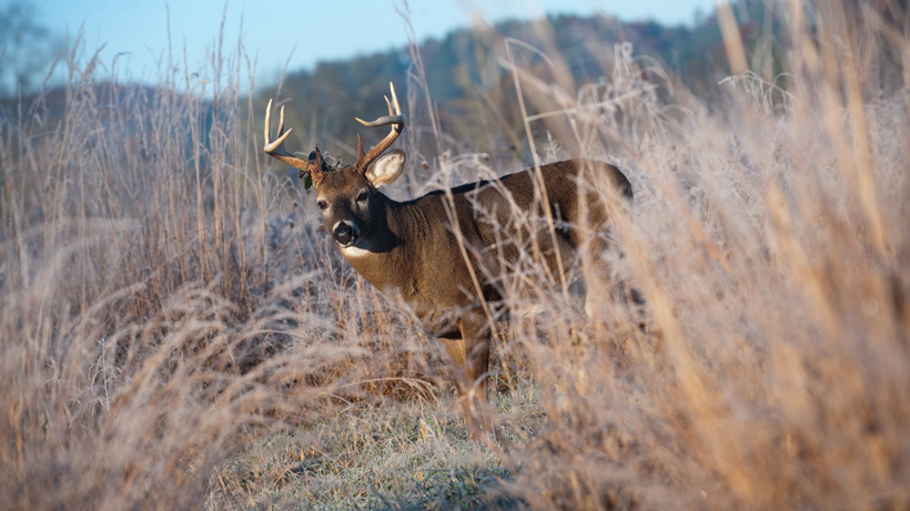 Refunds available for ND whitetail hunters
