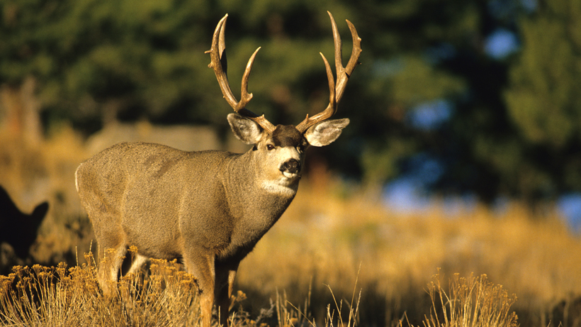 Poacher sentenced in Oregon