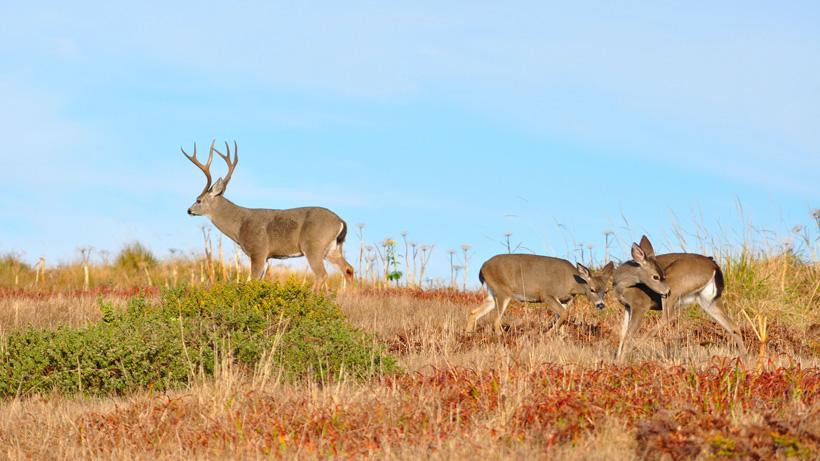 Oregon man sentenced for 2019 hunting crime