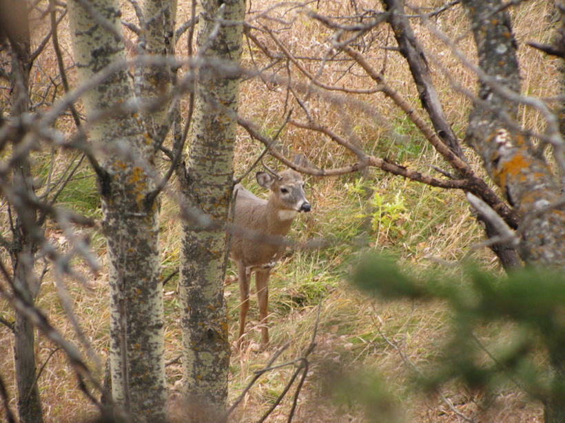 Small buck near the stand