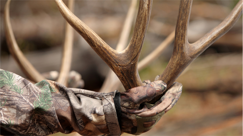 Holding a pair of antlers (not from deer in article)