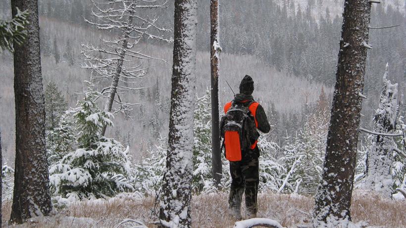 Colorado Poaching