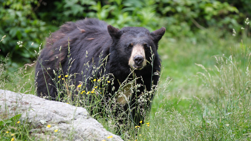 NEW BEAR BAIT REGISTRATION IN WY HAS JUST BEEN DELAYED DUE TO COVID-19